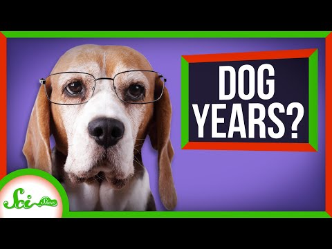 The Truth About Dog Years (Your Pupper Is Older Than You Think!)