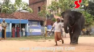 Elephant's love (samanwayam.com)