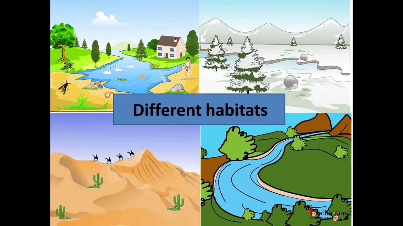 Adaptability of organisms to habitat. Fitness of living organisms: examples