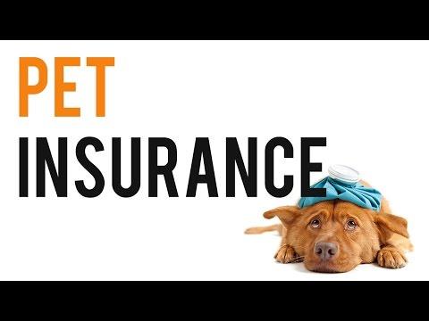 Pet Insurance - Compare Pet Insurance
