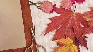 Cómo secar hojas para decorar - Decogarden