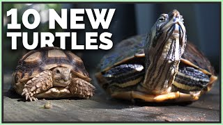 i-got-10-new-turtles-tortoises-turtle-sanctuary-tour