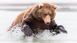 Alaska Photography Tour - Best of Alaska