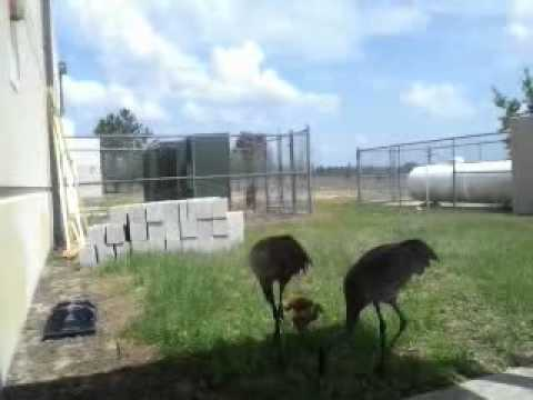 Four Corners Charter School's 2 new students
