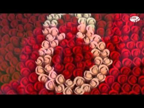 8 mart – Beynəlxalq Qadınlar Günüdür