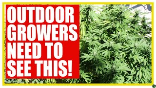 Growing Outdoor This Season? YOU NEED TO KNOW THESE THINGS