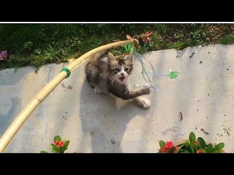 Funny Cats and Kittens playing