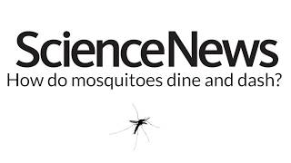 How do mosquitoes dine and dash? | Science News