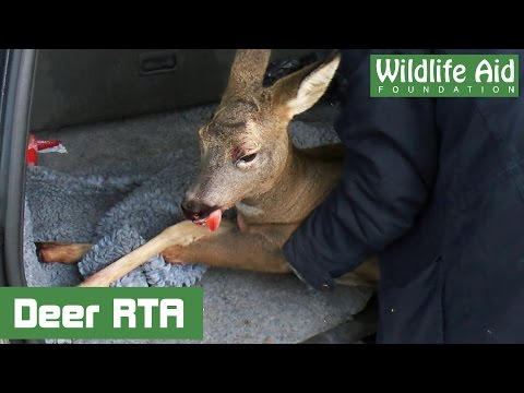 Emotional Deer Rescue - Road Traffic Accident