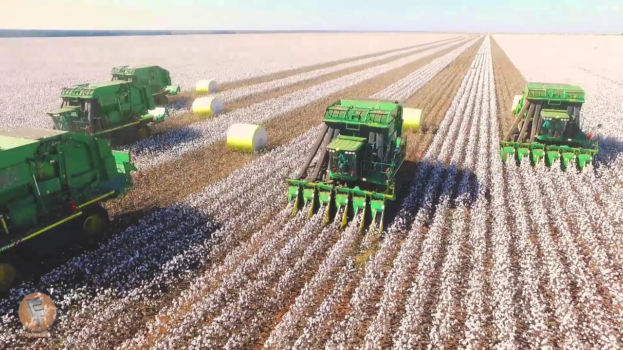 Colheita do Algodão na Fazenda Planalto (MS) - YouTube