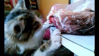МЯСНЫЕ СУБПРОДУКТЫ в рационе кошек