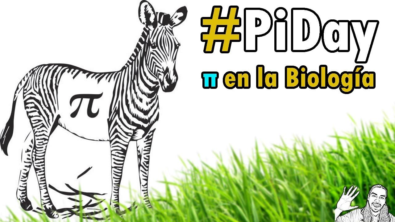 π en la Biología | Especial #piDay