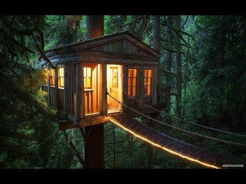 Дома на деревьях. Как не надо строить.