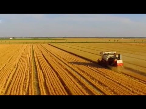 Download Youtube: China's and world food security face challenges