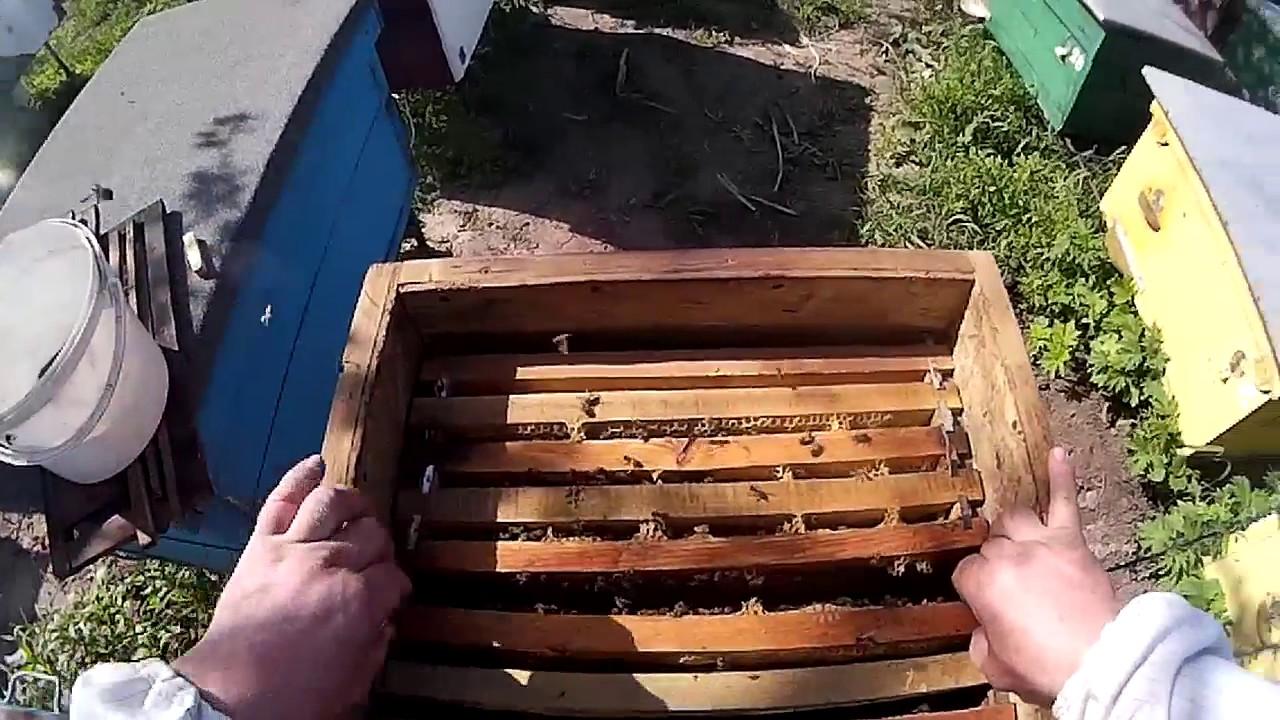 Интернет-магазин товаров для пчеловодства. Все для пасеки с доставкой по украине вы можете купить в нашем магазине. Купить 1000+ товаров для пчел и пчеловодов.