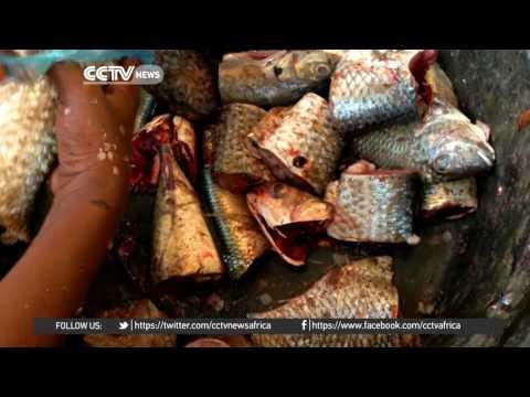 Desert Series: Exploring Nouakchott fish market In Mauritania