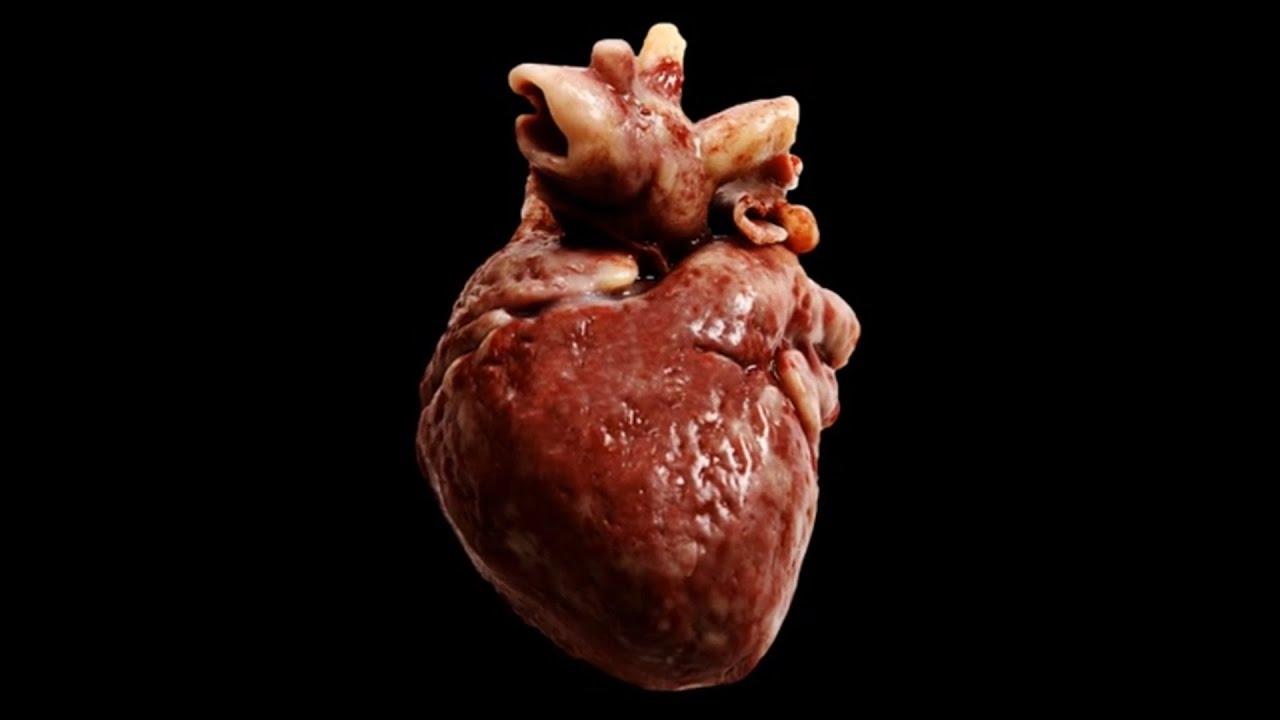 17 Krasse Fakten über dein Herz! - YouTube