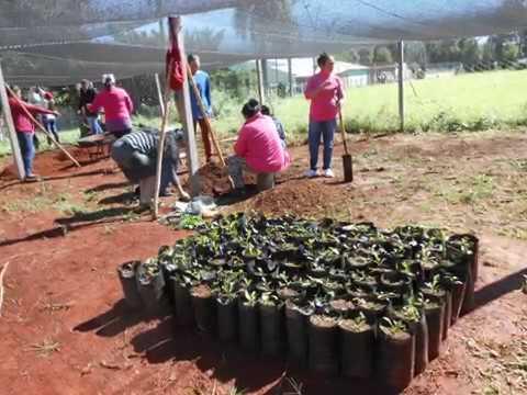 SPOT 3 Agroforestería jopará
