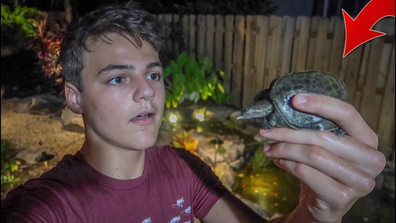 he-found-a-lost-turtle-in-my-backyard