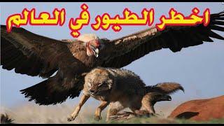 اخطر 10 طيور في العالم على الاطلاق -إذا رأيتها اهرب بسرعة وانج بحياتك