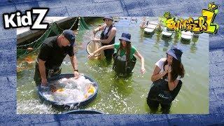סוואגרז 2 | פרק 5  מה עשינו בבריכת דגים?