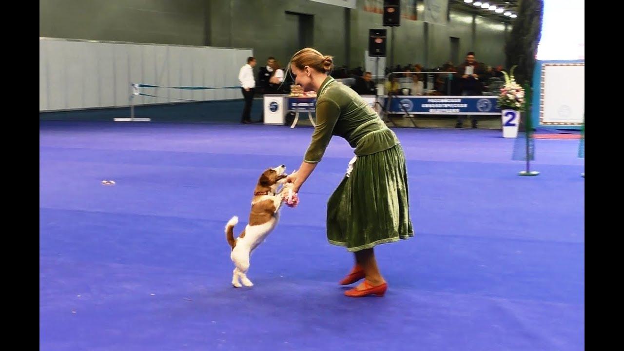 Q Dog Dance Танцы с �...