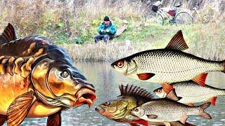 Какая рыба клюет в ноябре Какую рыбу ловить осенью в ноябре Какая рыба перестает клевать в ноябре