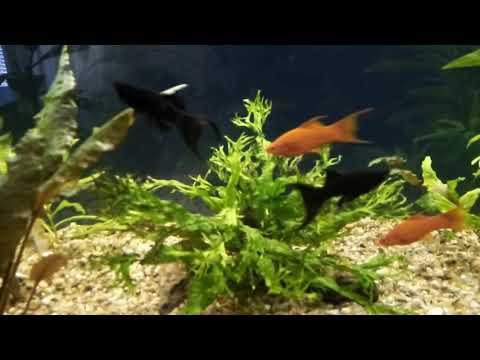 Аквариум после лечения рыбок