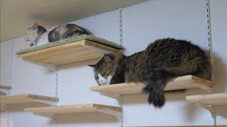 姉ちゃんが立ち去った後の展望台にそっと登るボス猫兄さんです。 キャッ...