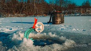 Зимняя рыбалка Щука на жерлицы Первый Подмосковный лёд 2020 2021 Открытие сезона зимней жерлицы