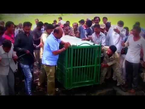 Lion rescued from a well in India