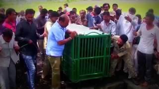 بالفيديو.. إنقاذ شبل من بئر في الهند