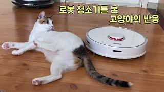 제법 좀 컸다고 로봇청소기 안 무서워하는 삼색 고양이의…
