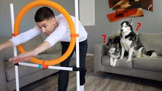 Teaching My Huskies How To Jump Through A Hoop!