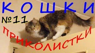 КОШКИ ПРИКОЛИСТКИ в ужаснике Туннель Смешные коты и кошки Приколы Funny Cats Video YouTube