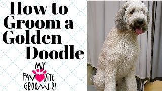 How to Groom a GoldenDoodle thumbnail