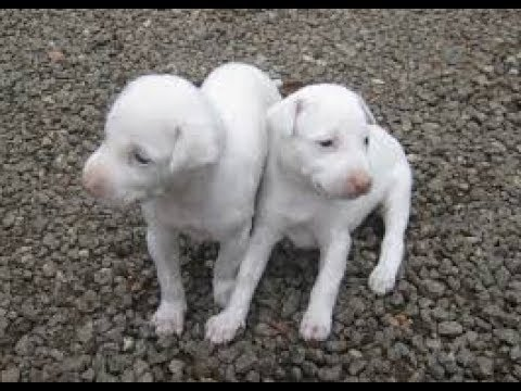 MY PET DOGS -ITS AMAZING pets around  the world