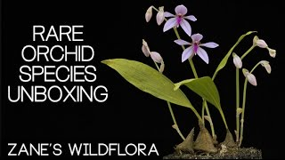RARE orchid species from EBAY - Unboxing