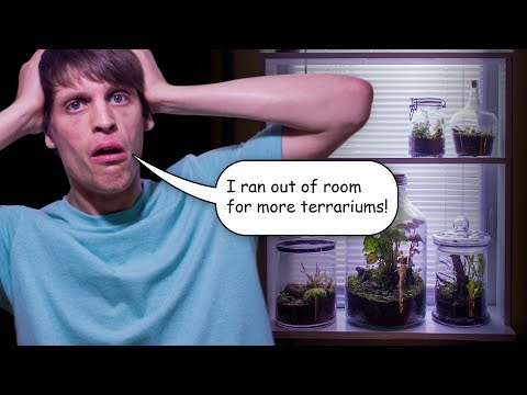 I Ran Out of Room For Terrariums! - Vlog #3