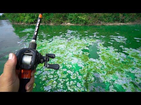 Fishing in TOXIC BLUE WATER!!!
