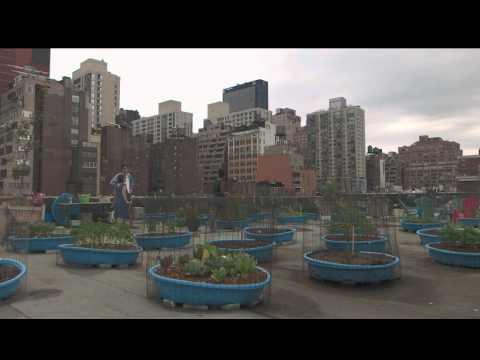 Urban Farming: Gemüse aus der Stadt - Trailer einer Dokumentation von NZZ Format