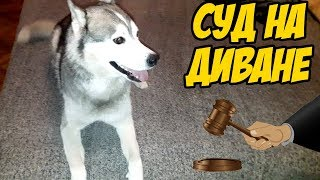 Маламут и хаски одни дома, оставил собак в квартире