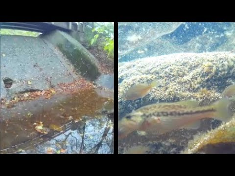 Underwater episode 39: Channahon State Park (site25/location5)