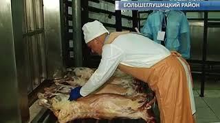 Лучшего ветеринарного врача выбрали в Самарской области
