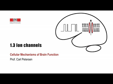 1.3 Ion channels