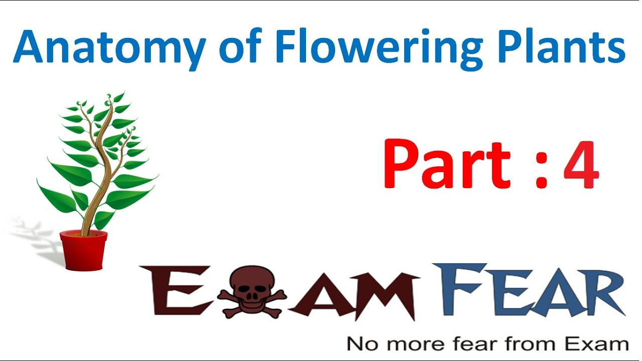 Biology Anatomy Of Flowering Plants Part 4 Permanent Tissues Types