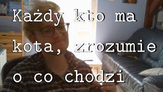 ZARZEW - Krótka piosenka posiadacza kota