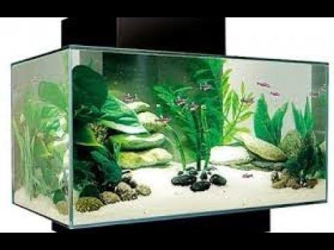 Thiên nhiên và động vật:Bể cá sau khi thay cây cảnh mới