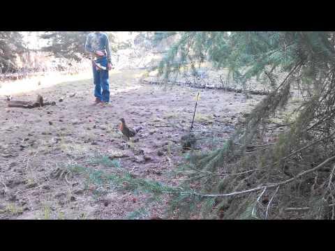 Owen's grouse kill