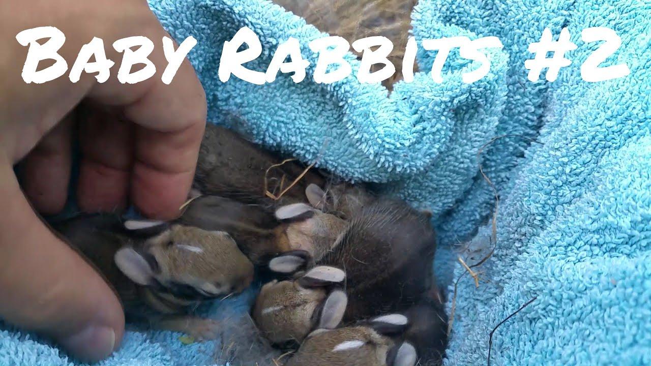 Wild baby rabbits in my yard - update. - YouTube
